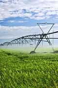 Water Line Photos - Irrigation equipment on farm field by Elena Elisseeva