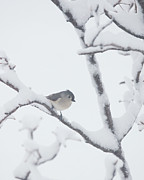 Birds In Snow Posters - Is it Spring Yet Poster by Kay Pickens