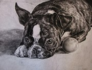 Animal Art Drawings Originals - Is Playtime Over by Cassandra Gallant