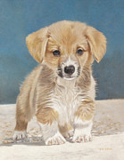Corgi Drawings - Is That A Snake by Helen Bailey