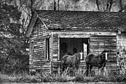 Old House Photos - Is This Our Barn by Betty LaRue