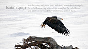 Scripture With Eagle Posters - Isaiah chapter 40 verse 31 Poster by Arlene Rhoda Nanouk