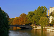 Autumn Trees Prints - Isar River - Munich - Bavaria Print by Christine Till