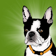 Tony Clark - Isla the Boston Terrier