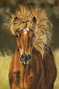 Horse Pastels Paintings - Islaender by Christina Frenken