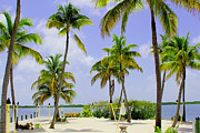 Coconut Trees Framed Prints - Islamorada Framed Print by Carey Chen