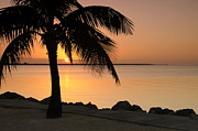 Islamorada Framed Prints - Islamorada Sunset Framed Print by Sandra Miner