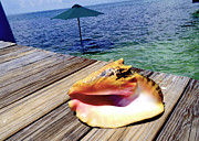 Freeport Prints - Island Conch Print by Carey Chen