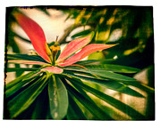 Flower Pictures Prints - Island Flower Print by Perry Webster