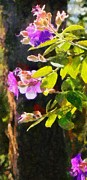 Robert Bissett - Island Flowers