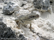 Danielle Perry Photo Prints - Island Lizard Print by Danielle  Perry