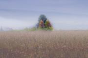 Dan Friend - Island of color in sea of fog