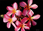 Pink Flower Branch Art - Island Scents by Cheryl Young