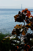 Linda Knorr Shafer - Island View
