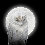 Angela Waye - Isolated White Owl in...