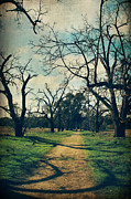 Sycamore Grove Park Prints - It All Depends Print by Laurie Search