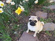 Tiny Dogs Photos - It must be Spring by Melody Gough
