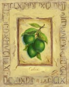 Italian Kitchen Painting Metal Prints - Italian Fruit Limes Metal Print by Marilyn Dunlap