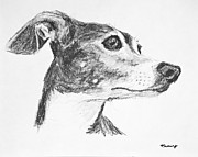 Skinny Drawings Prints - Italian Greyhound Sketch in Profile Print by Kate Sumners