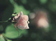 Green Roses Photos - Itll Be Alright by Laurie Search