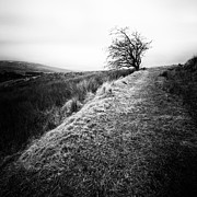 Lone Tree Photo Prints - Its hard to imagine Print by John Farnan