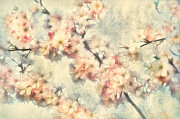 Sakura Mixed Media Prints - Its Time To Bloom Print by Gynt