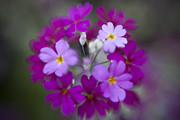 Bryan Freeman Metal Prints - Itsy Bitsy Purple Flowers Metal Print by Bryan Freeman