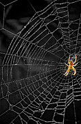 Nursery Rhyme Photo Prints - Itsy Bitsy Spider My Ass 3 Print by Steve Harrington