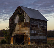 Western Kentucky Prints - Ivy Barn Print by Amber Kresge