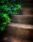 Vine Leaves Posters - Ivy Beside Steps Poster by Steve Hurt