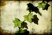 Vine Leaves Digital Art Posters - Ivy Poster by Ellen Cotton