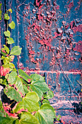 Silvia Ganora Art - Ivy leaves with rotten door by Silvia Ganora