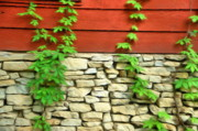 Red Buildings Digital Art Posters - Ivy on Stone and Wood Poster by Jeff Kolker