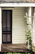 Screen Door Prints - Ivy on Trellis Print by Margie Hurwich