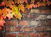 Mythja  Photography - Ivy over brick wall