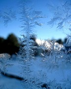 Patricia Sundik - Jack Frost Winter Ice...
