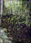 Haunted Digital Art - Jack Kells Woods by RC deWinter