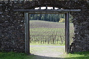 Pastoral Vineyards Framed Prints - Jack London Ranch Winery Ruins 5D22132 Framed Print by Wingsdomain Art and Photography