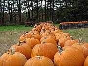 Farm Stand Art - Jack O Lanterns in Waiting by Barbara McDevitt