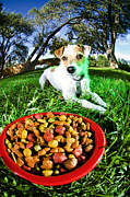Pictures Of Dogs  Prints - Jack Russel With Food Print by Chip Simons
