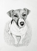 White Terrier Drawings - Jack Russell Portrait by Jacqueline Barden