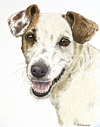 Pastel Dog Paintings - Jack Russell Terrier Portrait by Kate Sumners
