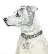 Dog Lover Drawings Posters - Jack Russell Terrier Poster by Sun Cruise