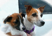 Dogs Digital Art Originals - Jack Russells by Betsy Cotton