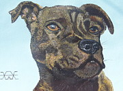 Staffordshire Bull Terrier Paintings - Jade by Alan Wilkinson