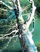 Inverted Color Prints - Jade Forest Print by Shawna  Rowe