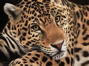 Rachel Stribbling - Jaguar Painting