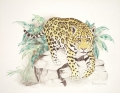 Jaguars Framed Prints - Jaguar Walk Framed Print by Dag Sla