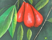 Fruit Tree Art Originals - Jamaican Apples by Kenneth Harris