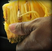 Pineapples Photos - Jamaican Jack Fruit by Karen Wiles